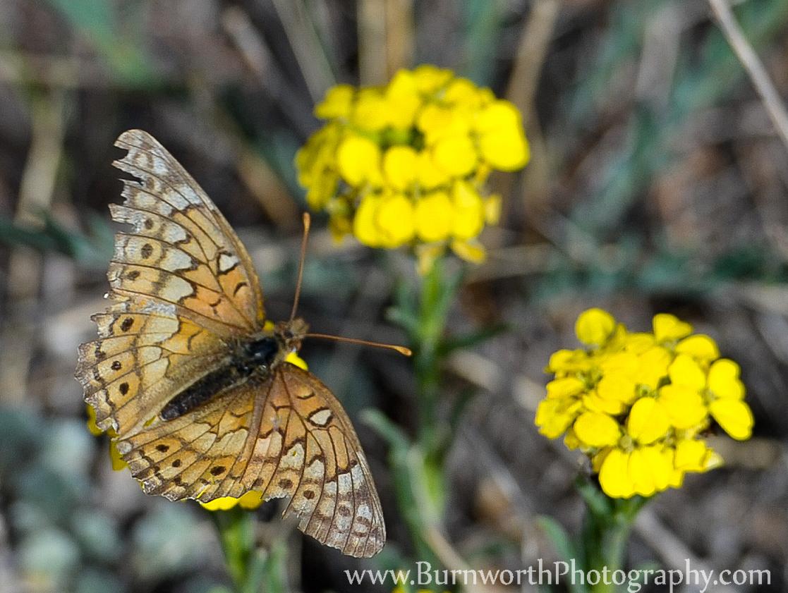 butterfly, butterfly effect